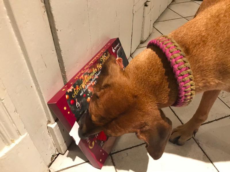 hundeadventskalender test