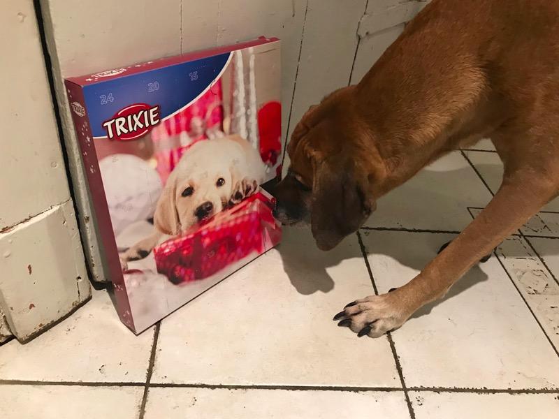 hunde adventskalender